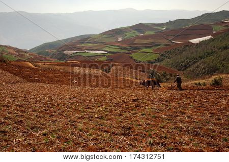 Chinese farmer ploughing his brown colored land with two oxen at midday with mountains and green hills at the background China.