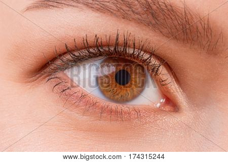 Close up view of brown female eye wearing contact lenses. Good vision vision correction or observation concept