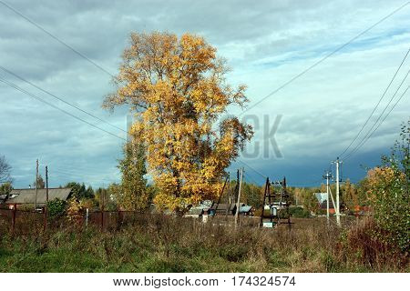 Country Autumn Landscape. The Big Tree With Yellow Leaves, Blue Sky With Clouds