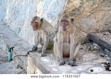 Two monkeys sitting on the floor in Thailand