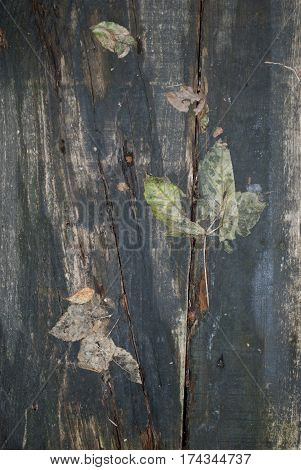 Close up of a wooden board with leaves