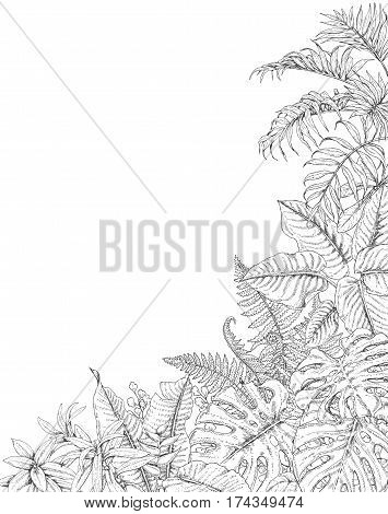Hand drawn branches and leaves of tropical plants. Corner background with space for text. Monstera fern palm fronds sketch. Black and white illustration coloring page for adult.