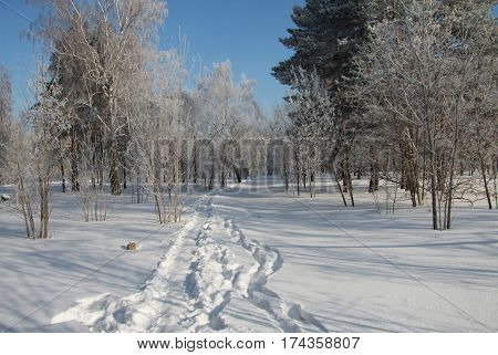 Trodden path in snow covered Siberian park