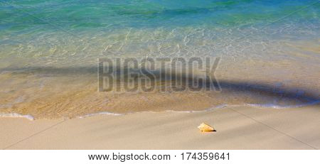 Seashell on beach and sea wave. Sommer meer Landschaft.