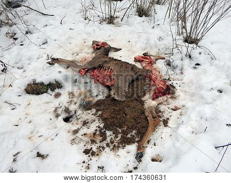 deer torn wolves , deerskin torn wolves ,