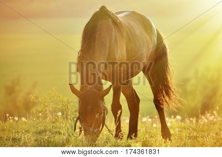 Photo horses close up in backlighting .