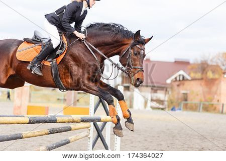 Bay horse with rider girl jump over hurdle on show jumping competition