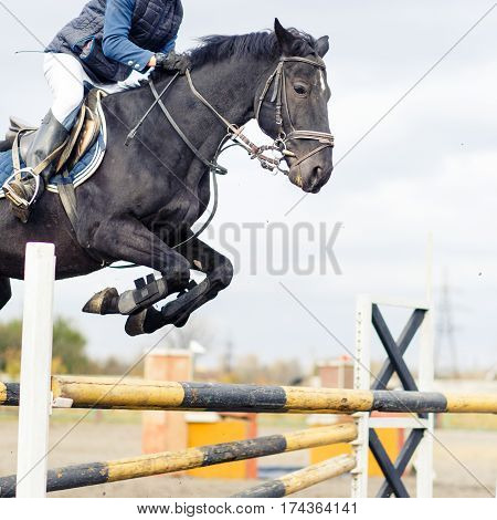 Raven horse with sportsman jump over oxer on show jumping competition