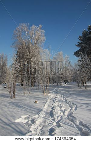 Trodden path in snow-covered Siberian park in a day time