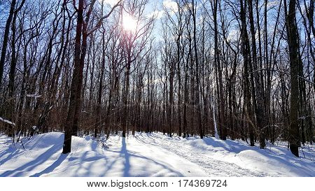 Winter snow-covered forest in the frosty sunny day