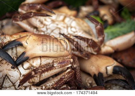 seafood background with crab claws at the market