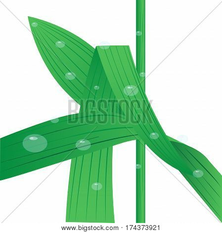 Leaves of grass with drops of dew on a white background. Vector illustration