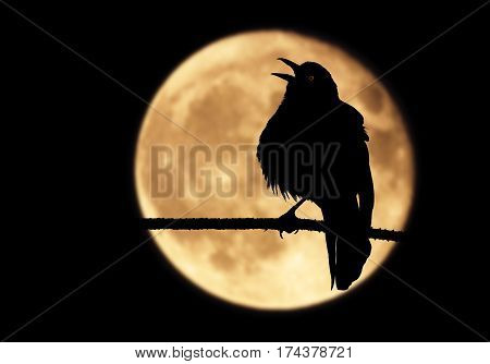 A silhouette of a raven perched on a branch with its beak wide open. The bird framed by a full moon shrieks into the moonlit night while emitting a mysterious red glow from its eye.