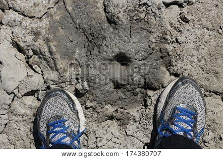 Little geothermal bubbling hot mudpot with gray slurry, and the feet of the observer wearing running shoes, in California.