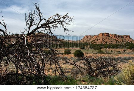 A dead fallen tree and arid desert landscape near Tres Piedras, New Mexico in the dry prairie lands of the American West