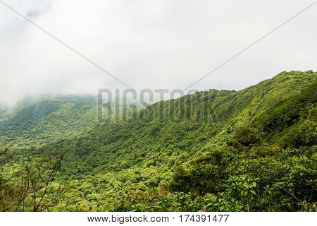 Rainforest landscape view in Monteverde Costa Rica