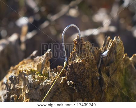 the fishhook stuck in a piece of wood