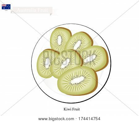 Australia Fruit Illustration of Kiwifruit or Chinese Gooseberry. One of Most Popular Fruits in Australia.