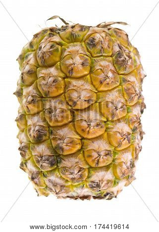 Closeup of a pineapple (Ananas comosus) a tropical plant with an edible multiple fruit