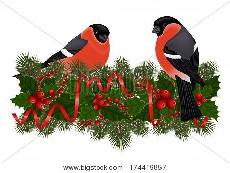 Illustration of bullfinch birds on fir tree holly berry branches with streamers isolated