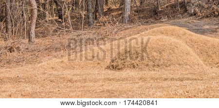 Burial mound in a woodland area on the side of a mountain in South Korea with trees and brush in the background