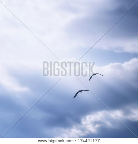 Couple of birds flying high to the far away. Romantic mood. Love.