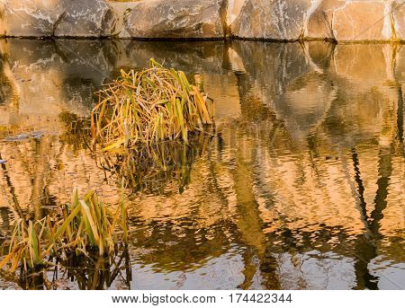 Closeup of a small pond with green plants growing in the middle of the pond and a beautiful reflection of the plants and of stones around the pond