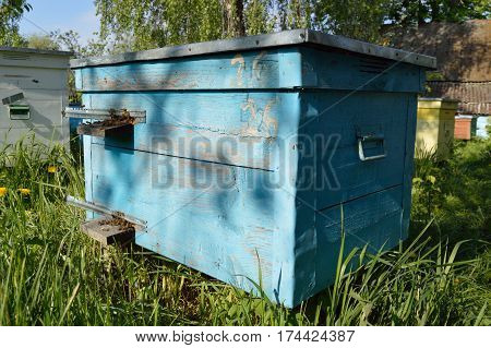 Blue dadan beehive with bees at the apiary in the garden