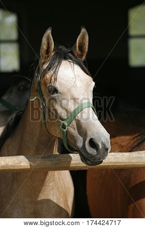 Portrait of a young stallion at animal farm