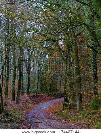 Road in forest-gravel road in German green park.