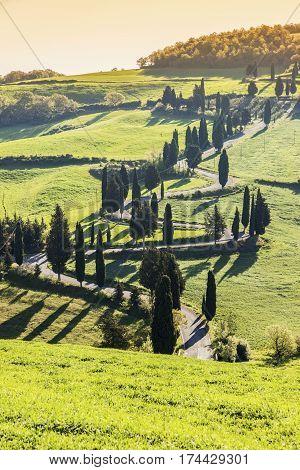Tuscany landscape - sunny bright day. Tuscany Italy.