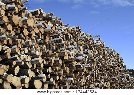 Logs in a stack against blue sky picture from the North of Sweden.