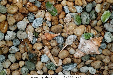 Natural Striped Fox Conch shell with another small seashells scattered on the pebble stones ground