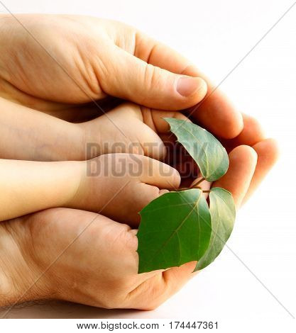 hands man and baby holding a green sprout