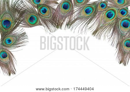 Composition with bright peacock feathers on the white horizontalbackground, lying flat, with empty place for your text, top view