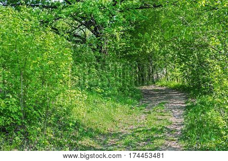 Verdurous view of road or track passing through deciduous green forest