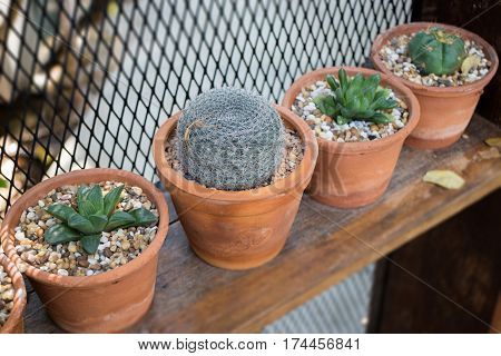 Vertical garden cactus plant pot in summer stock photo