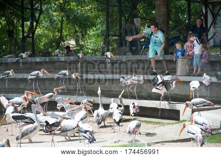 CHONBURI,THAILAND-SEPTEMBER 2,2016 : Unidentified tourists feeding the Painted Stork Bird (Mycteria leucocephala) in Khao Keaw open zoo,Chonburi Province in Eastern of Thailand.