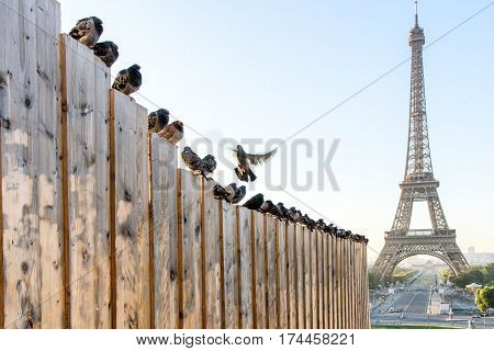 Bird And Eiffel