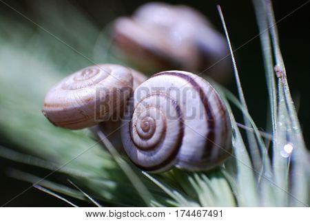 Little snails shells on the grass. Group of snail shells