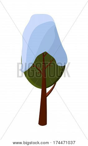 Green tree covered with snow on white background. Brown strong trunk is as support. It has big branches and little twigs, leaves are green in winter vector illustration of oblong kind of tree.