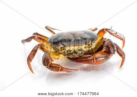 close up freshwater crab on white background. Ricefield crab in Thailand.