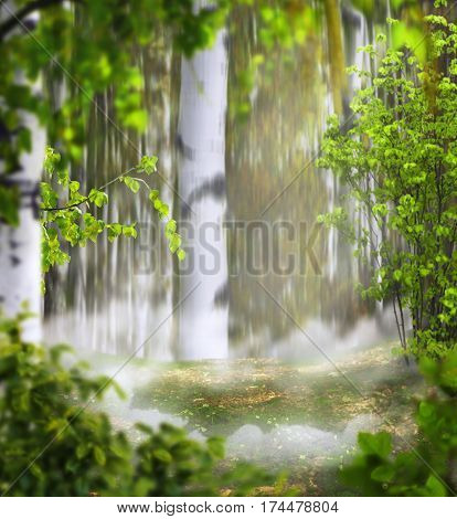 Beautiful summer mystical background photo montage with a birch grove the foggy meadow of the middle and leaves in the foreground