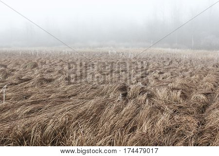 Fog in the field with withered grass Atmospheric photos of nature on a frosty foggy weather.