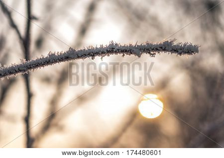 Branch With Frost Snowflakes