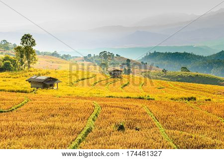 Small Hut And Rice Field With Rice Stubble Left After Harvesting At Ban Pa Pong Piang At Sunset, Chi