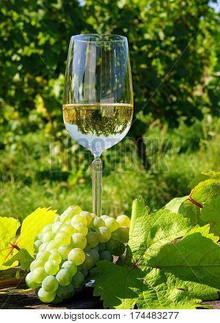 Glass of white wine with wine grapes in the vineyard