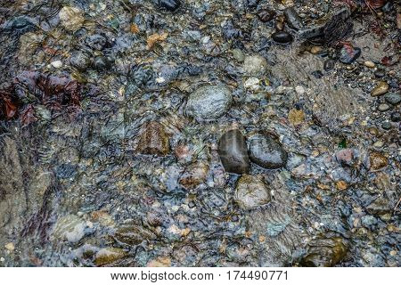 A closeup shot of a Pacific Northwest streambed with clear water and rocks.