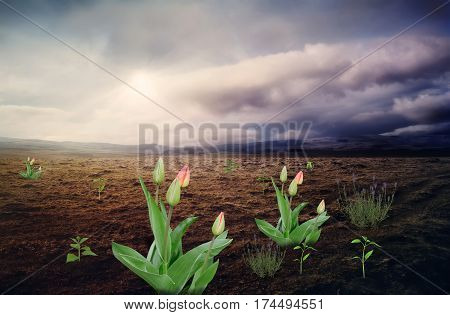 The surreal landscape : in a large mountain valley with uncultivated land punched flowers and plants at the stormy skies.