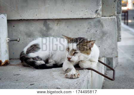 Greek cat is slipping on a wall at Paleochora town on Crete island, Greece